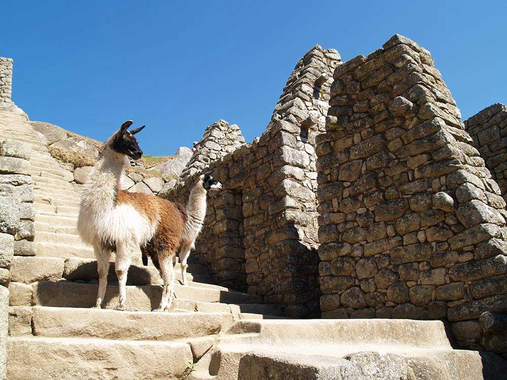 Peru 2007: Machu Picchu - Lamas in den Ruinen
